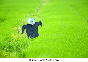 scarecrow in a rice field