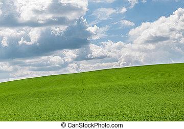 Fields near Hodonin in Moravia - Green fields near Hodonin...
