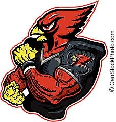 cardinal football - muscular cardinal football player mascot...