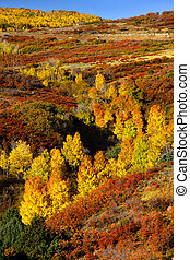 Dallas divide in Autumn - Scenic autumn landscape in...