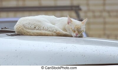 on the roof of the car wakes cat slow motion video - Light...