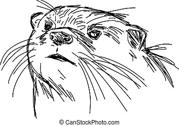 illustration vector hand drawn sketch of closeup African Clawless Otter isolated on white background.