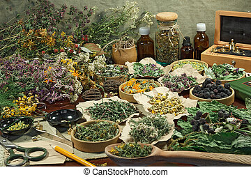 Set healing herbs. Dried herbs for use in alternative...