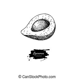 Lucuma vector superfood drawing. Isolated hand drawn...