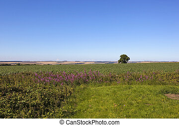 potato crop with willowherb - a flowering potato crop in the...