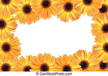 Abstract frame with orange flowers. Close-up. Studio...