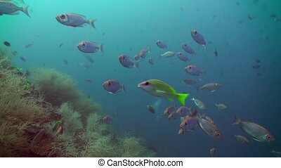 School of tropical fish on reef in search of food. - School...