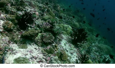 Underwater landscape of coral reef. Maldives. - Underwater...