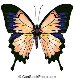 Butterfly Orange and yellow isolated illustration on white...
