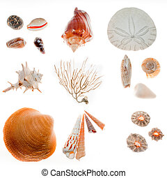 Beach findings - Found on beach walk: a great variety of...