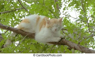 red cat sitting on a branch slow motion video - sleepy...