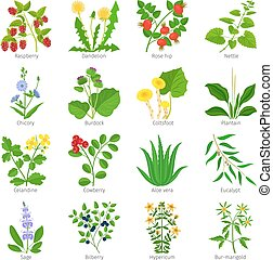 Aromatherapy medical herbs and flowers hand drawn vector on...