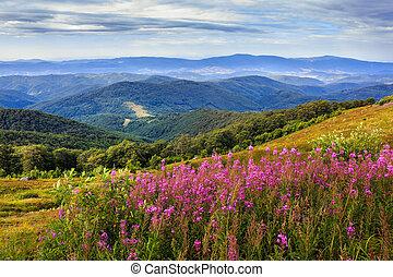flowers on a mountain hillside