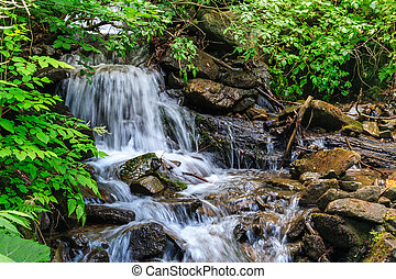 small waterfall in forest shadow - small waterfall behind...