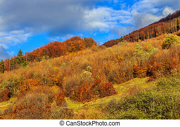 autumn hillside with pine and Colorful foliage aspen trees near valley