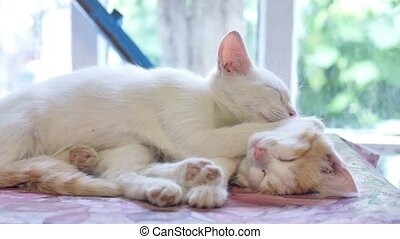 white kitten sleeping cat on a red kitten friendship funny...
