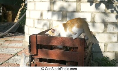 two kittens are fighting on the box outdoors - two kittens...