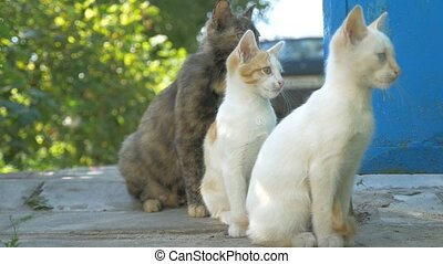 cat and kitten outdoors sitting slow motion video - cat and...