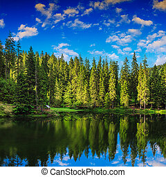 Mountain lake in coniferous forest - lake and coniferous...