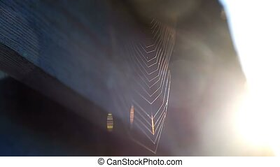web rooftop solar light morning nature spider slow motion...