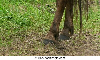 horse hoof slow motion video - horse legs closeup of is a...