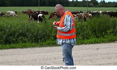 Farmer numbering the cows that graze in the meadow