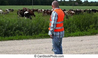 Farmer talking on the phone near the cows that graze in the...