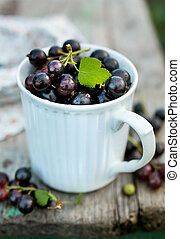 Freshly picked blackcurrants in a mug. Closeup. Food...
