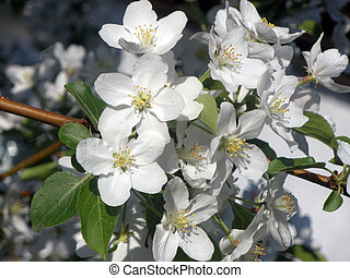 Flowering bush to apple trees - Flowering bush to aple trees...