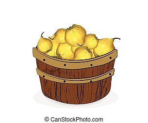 Quince fruits in a wooden basket. Vector