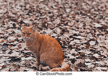 Ginger fat cat sitting on fallen autumn leaves