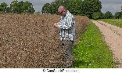 Farmer near to dry rape field