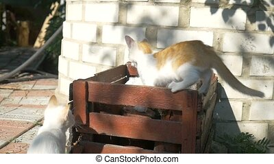 kittens two are fighting on the box outdoors - kittens two...