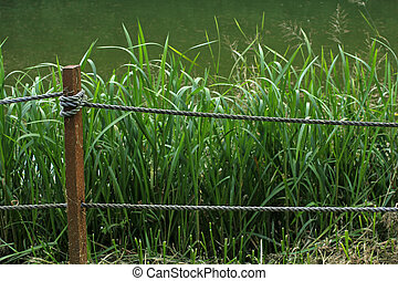 overgrown edge of the fish pond