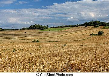 scenic summer rural landscape