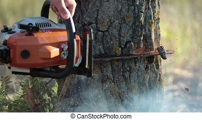 Man with orange chainsaw cutting dry tree - Close up male...