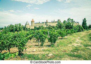 Carcassonne - vineyards in Carcassonne, France