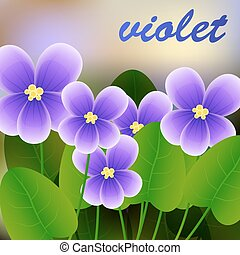 Spring background with blossom brunch of violet flowers. Vector