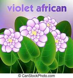Spring background with blossom brunch of african violets flowers. Vector