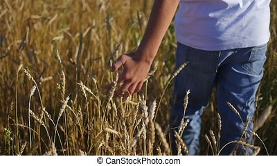 kid hand touches the ears on a field of wheat
