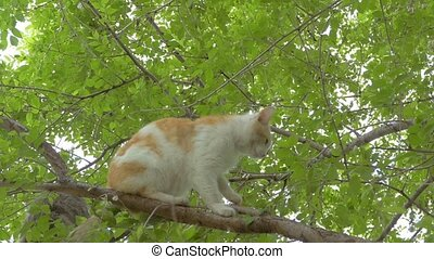 stray cats on the tree slow motion video - stray cats sit on...