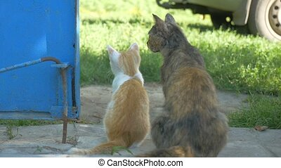 cat and the kitten sit back outdoors slow motion video - cat...