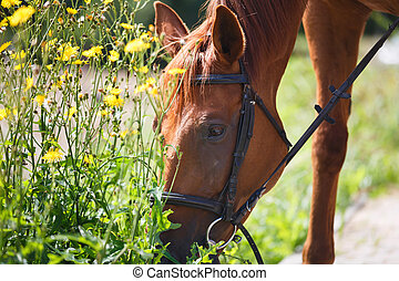 The horse feeding the wildflowers after training at summer...