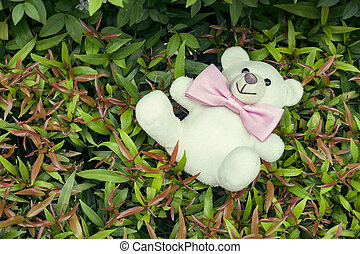 Teddy Bear with a bow tie on nature background
