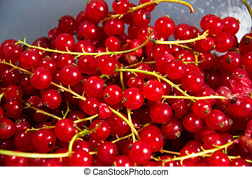 currants - red currants