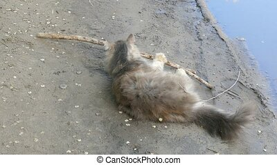 cat lying on ground, playing with a stick slow motion video