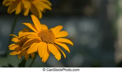 flower yellow on a green landscape slow motion video background nature