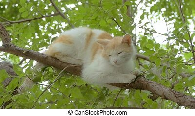 on a tree branch is sleeping cat slow motion video - on a...