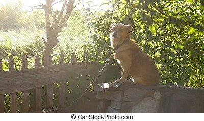 dog sitting on a chain in a box behind the sunlight green...