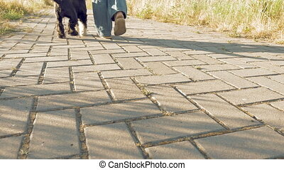 Young womans feet walking with little funny dog - Static...